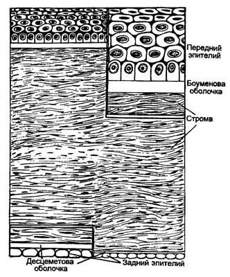 Поверхностный слой роговицы
