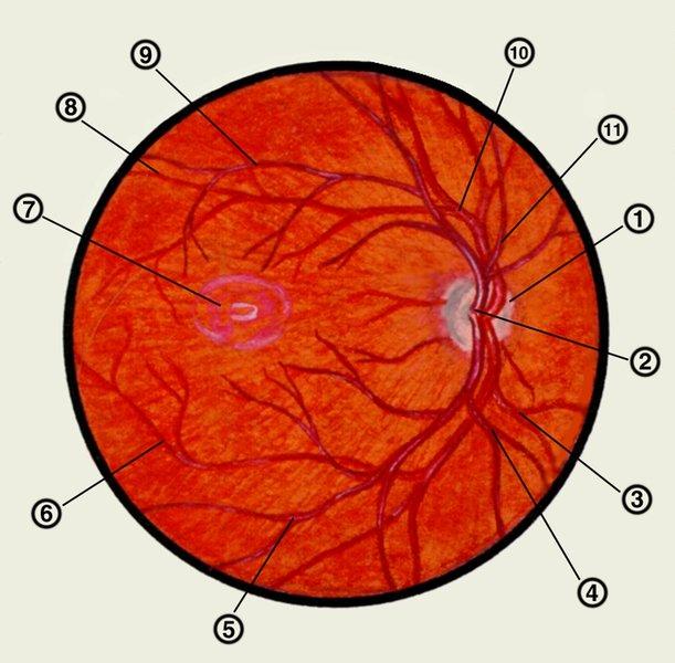 Почему ухудшилось зрение в 40 лет